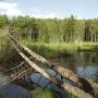 """Национальный парк """"Бузулукский бор"""". Фото: А. Чибилёв"""