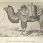 Верблюд, завьюченный бочонками с водой. Рисунок В.И. Роборовского. Экспедиция Н.М. Пржевальского