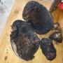 Четверговая чёрная соль. Фото: wikipedia.org