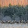 Орловское полесье. Фото: Игорь Шпиленок