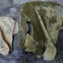 Кости древнего бурого медведя. Фото: Елена Малафеева