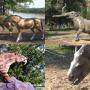 Парк-музей «Гусиный перелет» в Павлодаре – пример брендинга территории на основе палеонтологических природных памятников