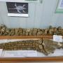Скелет ласты плезиозавра в музее Клуба юных геологов-экологов им. Г.А. Сопоцько