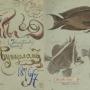 Альбом Н. Н. Миклухи-Маклая с рисунками рыб Мыс Бугарлом, Новая Гвинея. Научный архив РГО