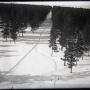 Челябинский бор в 1932 году. Фото: Объединенный государственный архив Челябинской области
