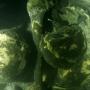 """Человеческие останки на пароходе """"Балхаш"""". Фото: """"Разведывательно-водолазная команда"""""""
